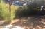 Backyard.