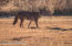 4255 E Beaver Vista Rd, Rimrock, AZ 86335