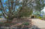Large shade trees