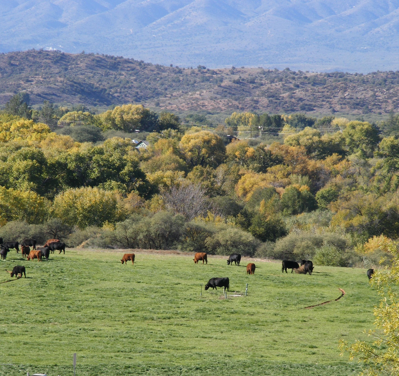 240 S Bonito Ranch Cornville, AZ 86325