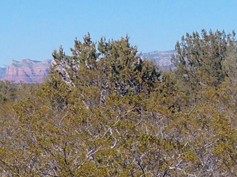 008hl Running Wolf Lane Rimrock, AZ 86335
