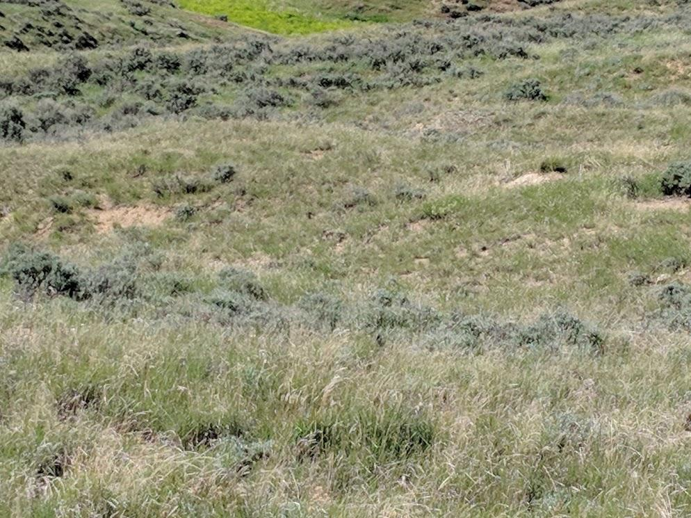 Thompson Creek Road, Clearmont, Wyoming 82835, ,Ranch-Land,For Sale,Thompson Creek,18-633