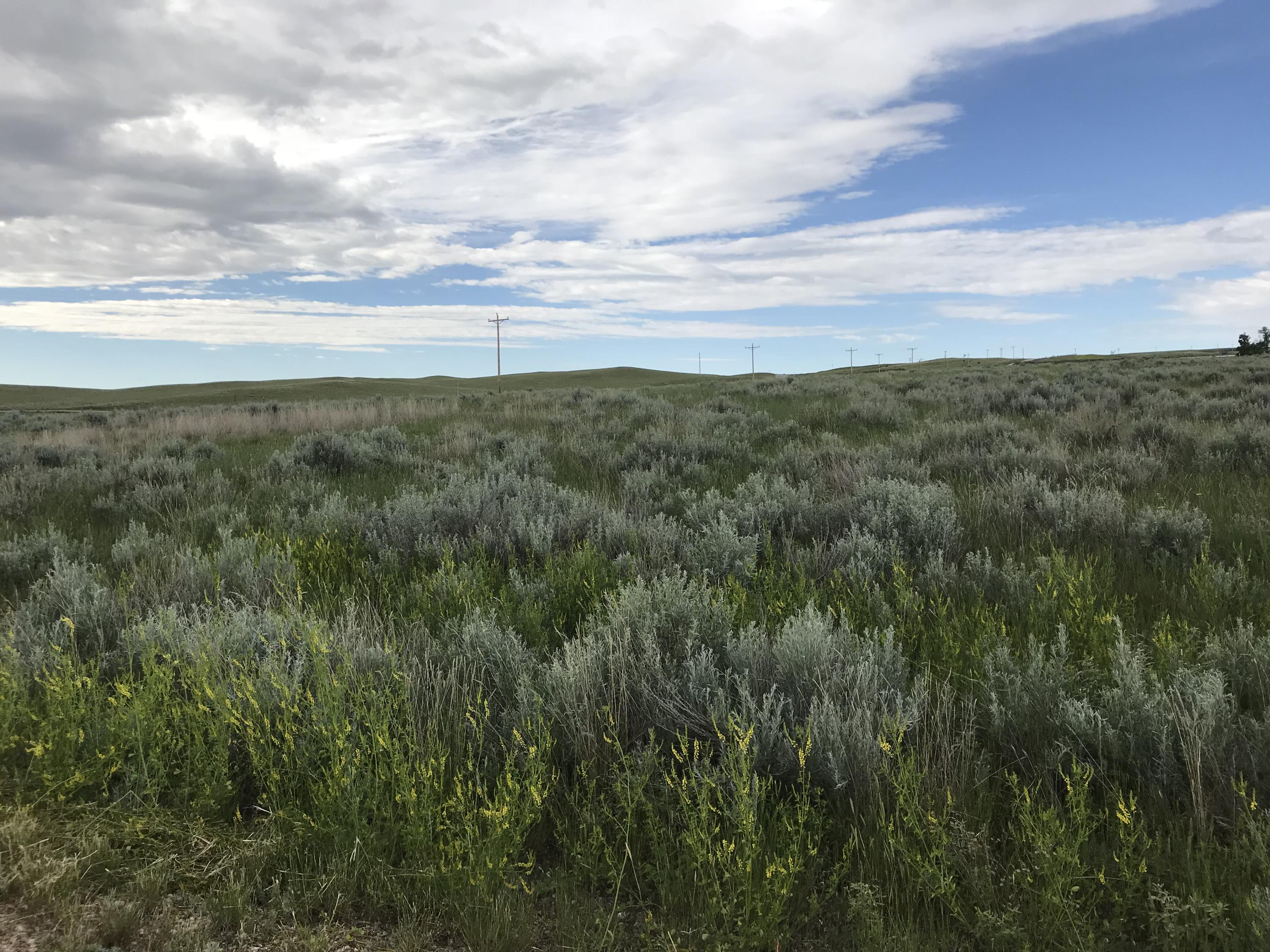 Lot 8 TBD, Buffalo, Wyoming 82834, ,Building Site,For Sale,TBD,17-704