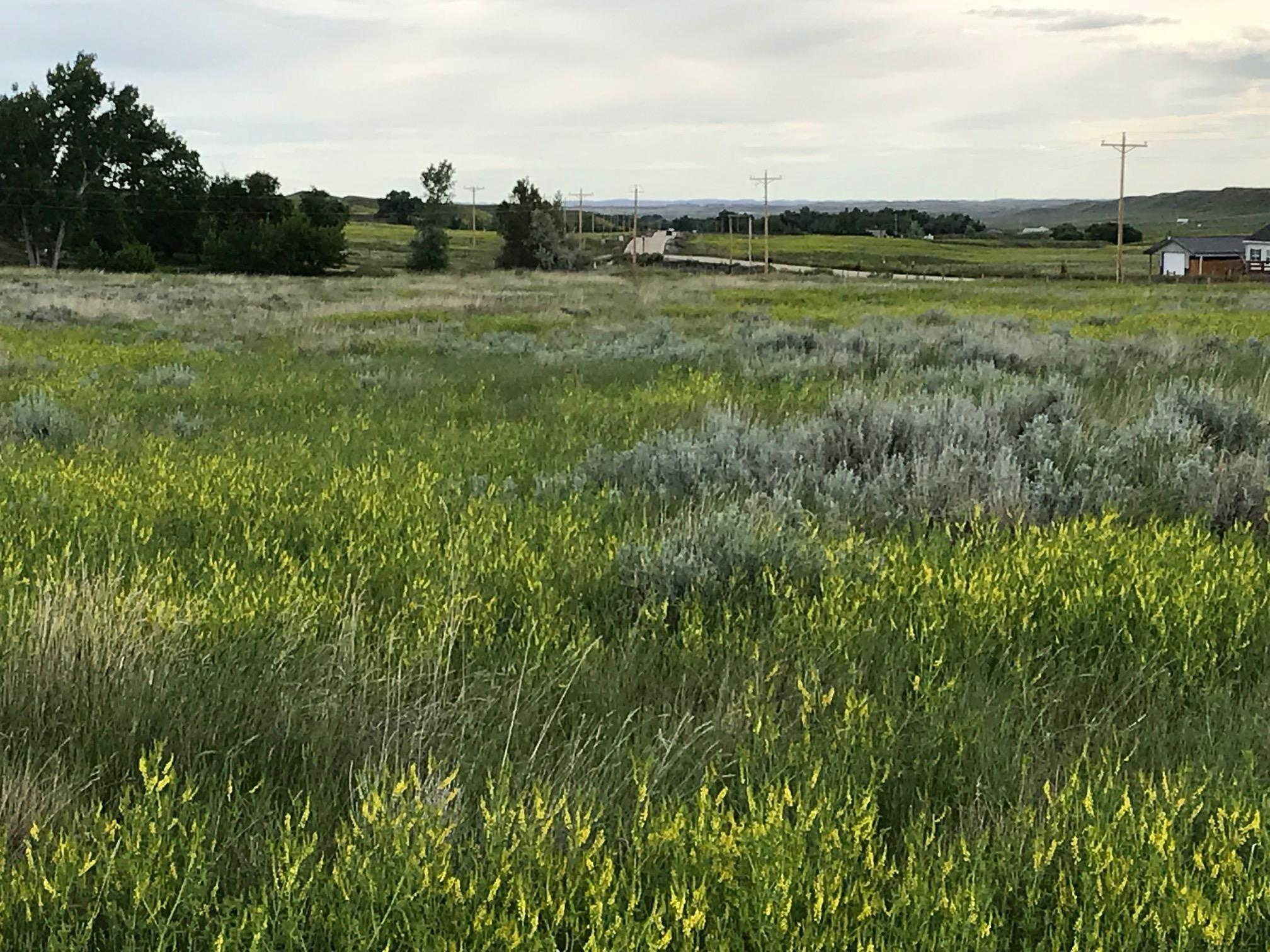 Lot 20 TBD, Buffalo, Wyoming 82834, ,Building Site,For Sale,TBD,17-731
