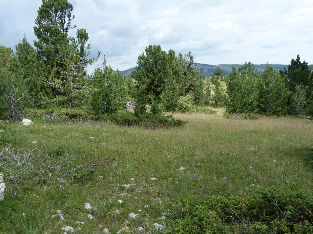 Billy Creek Access Rd, Buffalo, Wyoming 82834, ,Building Site,For Sale,Billy Creek Access Rd,19-467