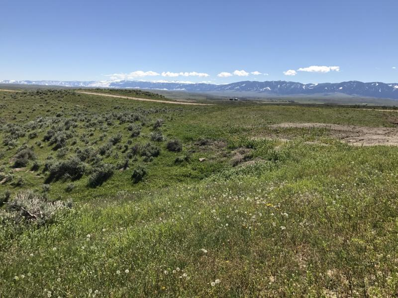TBD Early Creek Road, Ranchester, Wyoming 82801, ,Ranch-Land,For Sale,Early Creek,19-886