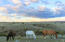 SaddleCrest Drive, (Lot 36), Sheridan, WY 82801
