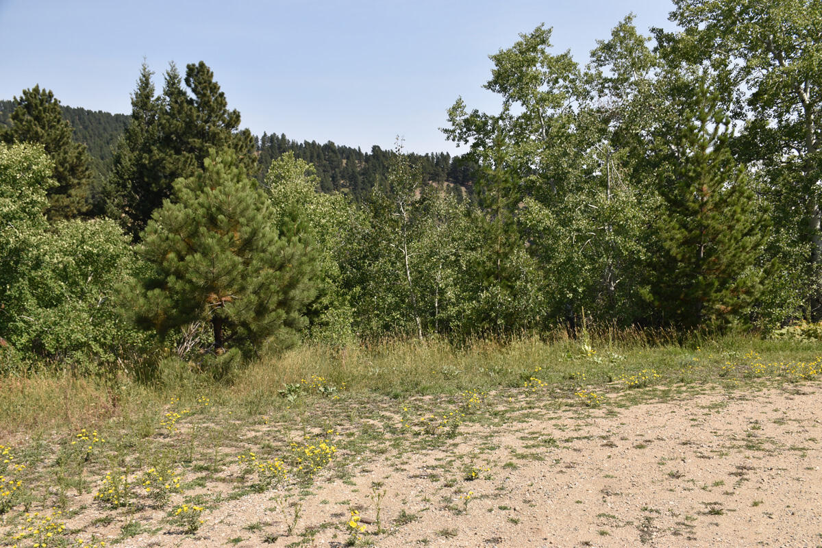 Whispering Pines Road, Story, WY 82842