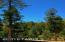 Deck views of magnificent Ponderosa Pines
