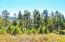 Full grown pines.