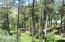 Lush vegetation.