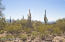 The Tucson Mountains to the west make for an excellent view.