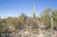 Mature saguaros provide excellent views and an intriguing landscape.