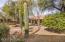 Saguaro cactus in backyard.