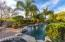 Mature palm trees for shade and low care landscaping