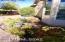 7855 W Blue Heron Way, Tucson, AZ 85743