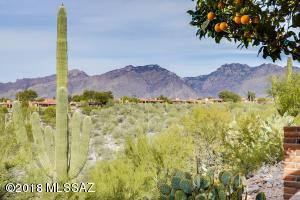 Stunning saguaro & mountain views
