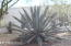 Property abounds with Arizona Beauty