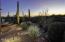 14480 N Sunset Gallery Drive, Marana, AZ 85658