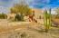 Serene desert setting for this contemporary Sante Fe style home
