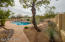 Private backyard with orange tree,desert plants and garden.