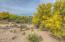 815 E Placita De Roberta, Tucson, AZ 85718