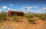 High Desert Pasture Livestock Well