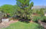 6529 N Shadow Bluff Drive, Tucson, AZ 85704