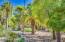 Charming walking path through mature desert garden. The communities personal oasis.