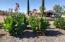 Beautiful plants in Front yard