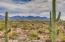 Saguaro Studded Mountain Views