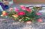 Rose Bush (front patio)