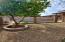 Mature Lemon tree in rear yard