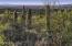 An abundance of saguaros and lush landscape