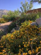 back yard hillside in bloom