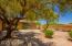 Mature Mesquite Tree in the backyard.