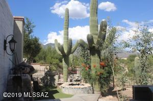 Outside patio off the kitchen - there are huge saguaros everywhere