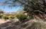 Mature desert landscaping