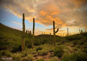 Own Your Own Canyon and Giant Sahuaro Cactus Garden!