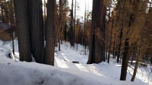 55114 Alder Drive, Sequoia Crest, CA 93265