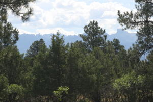 Lot 332 Bear Cub, Ridgway, CO 81432