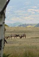 Parcel CR Sound of Music Ranch Placerville CO 81430