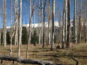 98 ASPEN RIDGE Drive Mountain Village CO 81435