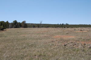 TBD County Road Y43 Norwood CO 81423