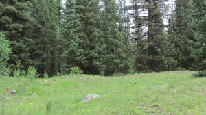SITE 27 BACKWOODS, Ophir, CO 81426