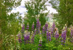 Lot 502 Russell Drive, Mountain Village, CO 81435