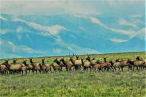 Specie Wilderness Ranch South Parcel, Placerville, CO 81430