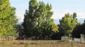 Lot 55 Tulip Circle Montrose CO 81403