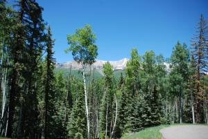 TBD Adams Way, Mountain Village, CO 81435