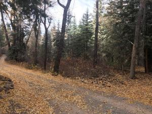 TBD River Trail Placerville CO 81430